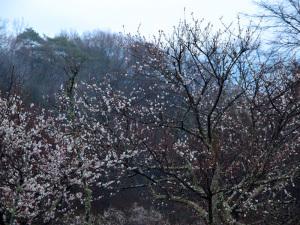 クリックすると拡大できます → ◎山里に咲いていた春花
