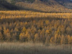 クリックすると拡大できます→◎夕陽の丘の秋色